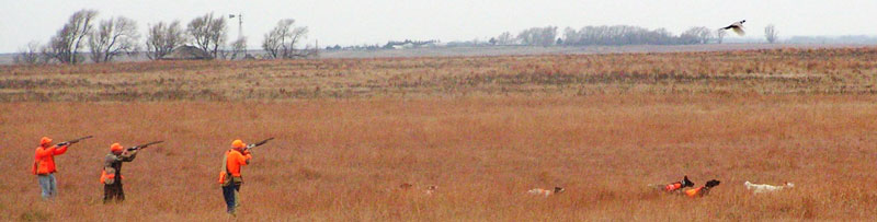 Kansas pheasant hunting preserves